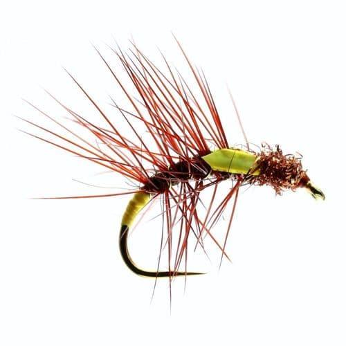 FIERY BROWN SNATCHER - CALEDONIA