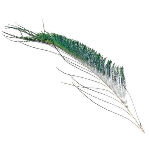 Veniard Peacock Sword Tails Natural
