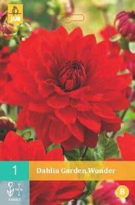 Dahlia 'Garden Wonder'   3L