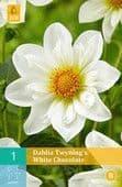 Dahlia 'Twyning's White Chocolate'    3L