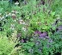 Groundcover Perennials & Shrubs