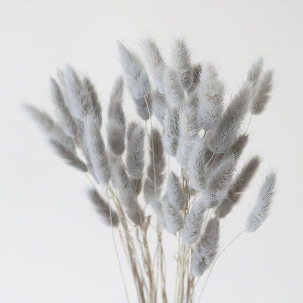 ΓΚΡΙ  LAGURUS / NATURAL GREY LAGURUS