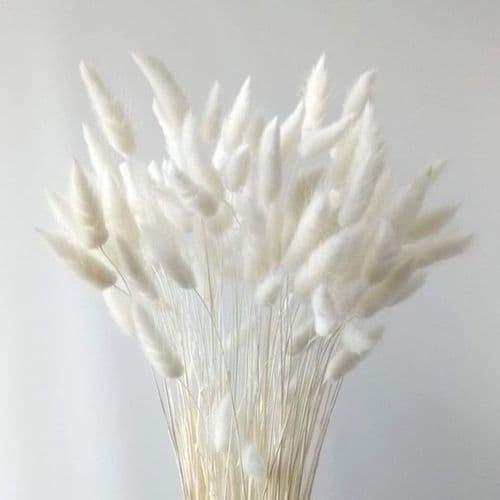 ΑΣΠΡΟ LAGURUS / NATURAL WHITE LAGURUS