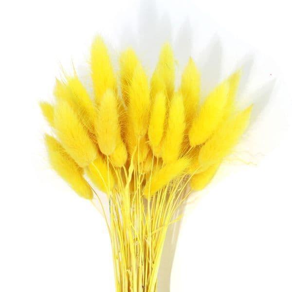 ΚΙΤΡΙΝΟ LAGURUS / NATURAL YELLOW LAGURUS