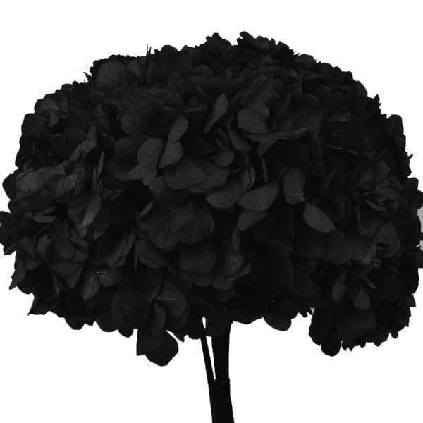 ΚΕΡΩΜΕΝΕΣ ΟΡΤΑΝΣΙΕΣ ΜΑΥΡΟ / PRESERVED HYDRANGEAS BLACK - ΑΝΑΜΕΝΕΤΑΙ
