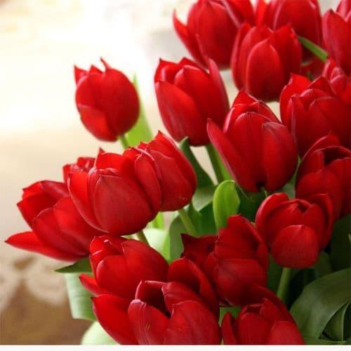 Bouquet of 20 red tulips / Μπουκέτο με κόκκινες τουλίπες
