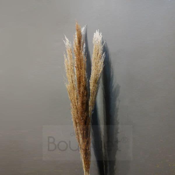 Dark sand Straight Pampas Grass - 130cm