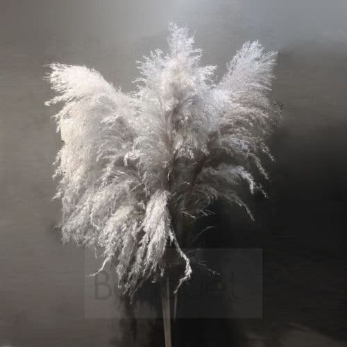 Extra Large  fluffy natural Pampas Grass - 140cm