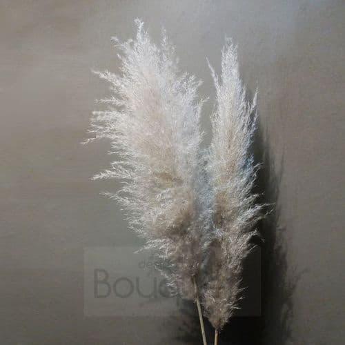 Large natural Pampas Grass - 120cm