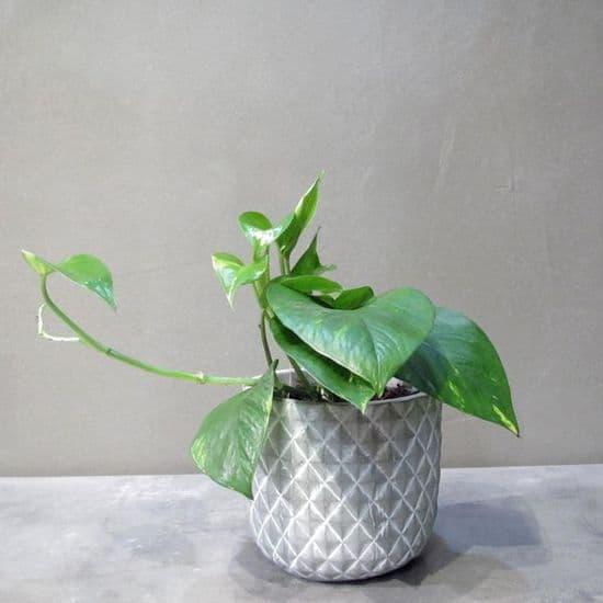 Plants - Φυτά
