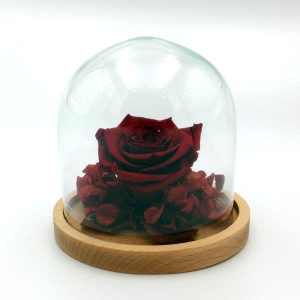 Red forever  rose in a dome / Διατηρημενο τριανταφυλλο μεσα σε θολο