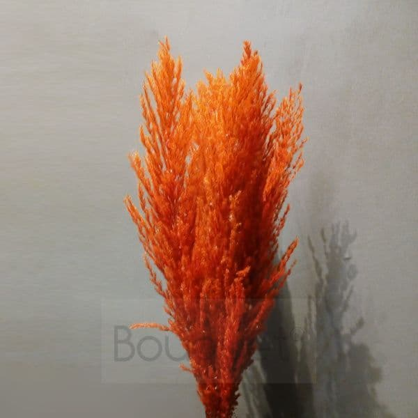Red - Orange Pampas Grass - 110cm