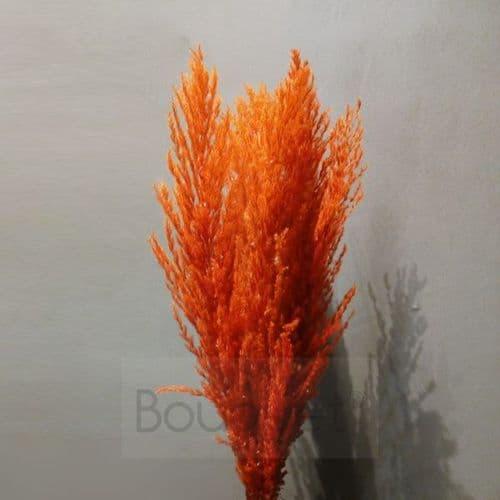 Red - Orange Pampas Grass - 110cm
