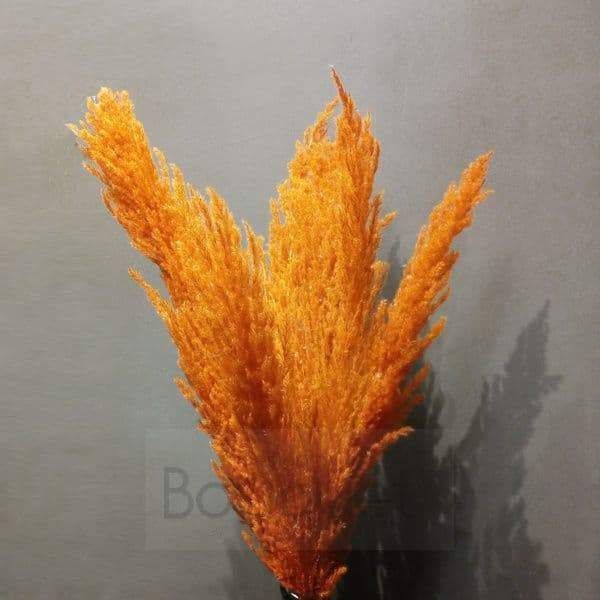 Yellow - Orange Pampas Grass - 110cm