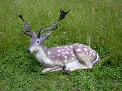 SRT Bedded Fallow Deer