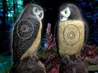 SRT Little Screech Owl