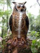 SRT Owl 1